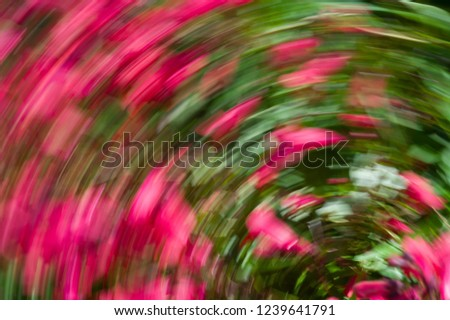 Impression with red flowers. The camera made a rotating motion while taking the picture. Background photo
