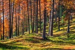 Impressive autumn forest in the Dolomite Alps. Fabulous morning view of mountain woodland, Cortina d'Ampezzo lacattion, Italy, Europe. Beauty of nature concept background.