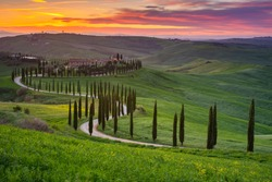 Impressive spring landscape,view with cypresses and vineyards ,Tuscany,Italy