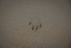 imprint of a dog on the beach