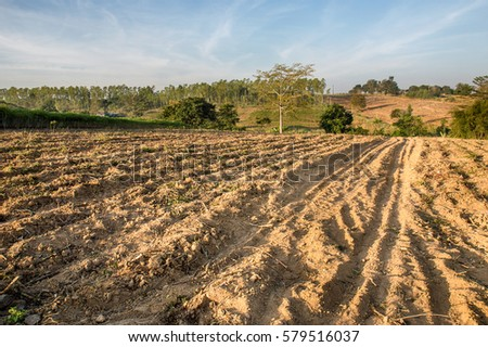 Improving soil for planting cassava on the foothill #579516037