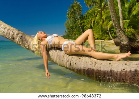 In a Coconut Grove Under Palm - stock photo
