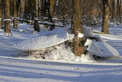 In a flooded forest in winter, ice floes have remained after the water has subsided