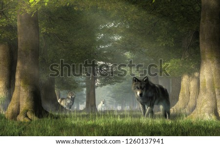 In a forest, a pair of grey timber wolves advances on you while the white furred alpha watches from a distance.  Watch out! These predators can be dangerous.  Beware the pack. 3D Rendering