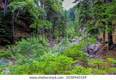 In backwoods. Middle of the forest. Deep forest scene. Wilderness forest scene