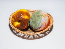In basket contains spoiled, inedible food. Unsuitable fruits, rotten yellow apple and sweet orange fruit, with green white mold around. Bacteria or various fungi are the cause of decomposition process