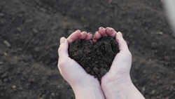 In female hands of farmer, he holds handful of fertile land in shape of a heart. Agricultural, agribusiness. In palms of gardener holds humus, fertilized soil, compost soil. Agriculture and fertility.