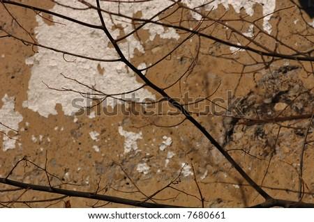 In focus image of tree against de focused Cracked grunge wall
