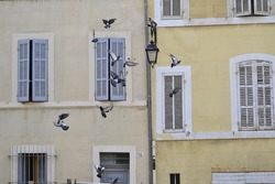 in Marseilles, streets and ancient buildings, light colors and flying birds