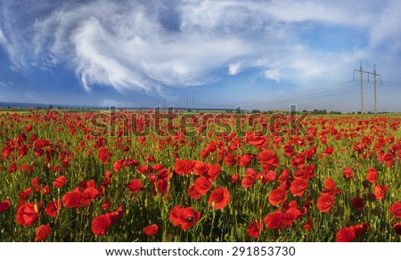 In May, June, in the margins of Europe bloom wild poppies - often in old wheat fields, where herbicides are not used. Huge red panoramic space is very beautiful. Map of Ukraine - Galich and Krylos.
