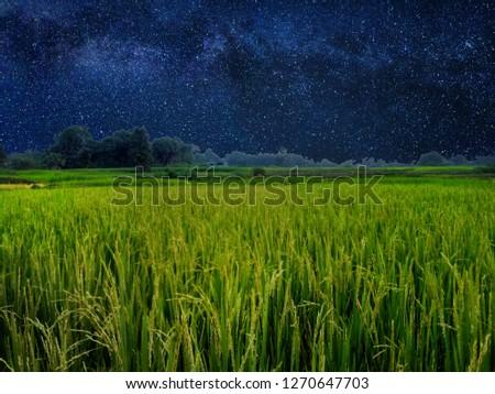 In mid-night rice fields. #1270647703
