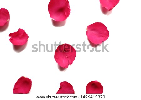 In selective focus of sweet red rose corollas on white isolated background and colorful flora details #1496419379