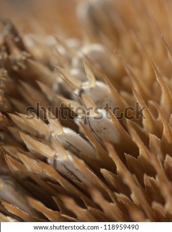 in sunflower seeds. macro