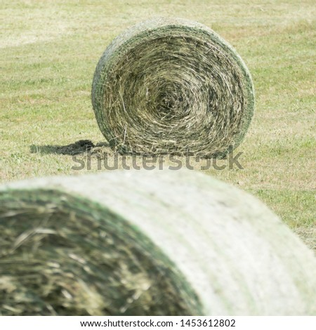 In the background focusing on a fresh compressed rounded whole hay bale with a shadow in a green meadow. In the front of the image there are parts of another blurred hay bale. #1453612802