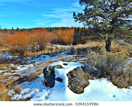 In the Cool, Cool. Cool of the Winter - Scenic view in the Camp Polk Preserve - near Sisters, OR #1094559986