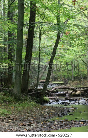 In the forest. Catoctin Mountain State Park. Maryland