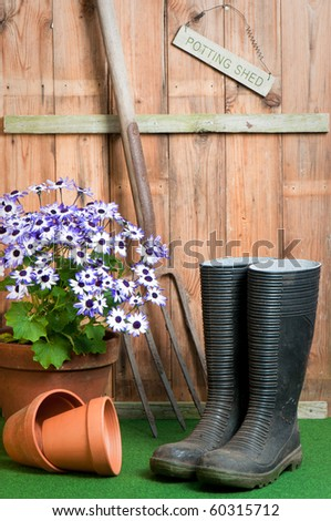 In the garden potting shed, garden concept with senetti potted plant, wellington boots and garden fork