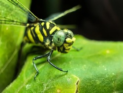 In the garden sits a dragon fly on the leaves of a green tree and the sun light is shining on it. Insect live in gardens, so people should not cut down the forest for no reason.