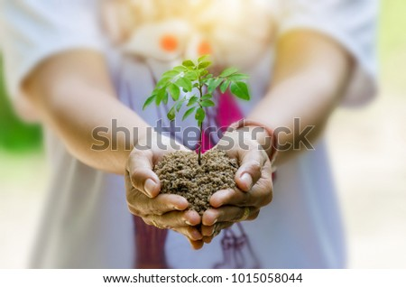 In the hands of trees growing seedlings. Bokeh green Background Female hand holding tree on nature field grass Forest conservation concept #1015058044