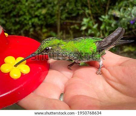 In the humming bird garden in Monde Verde Stock fotó ©