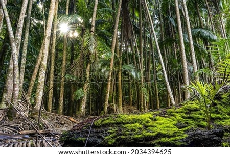 In the middle of the rainforest. Tropical rain forest. Tropical rainforest trees. Rainforest scene