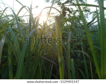 in the morning sunlight Shine #1529401547
