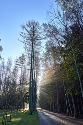 In the morning, sunshine falls through the trees on the trail.