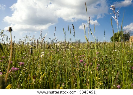 In the open countryside with grass, flowers, daisyflowers and so on. Deep blue sky with white clouds.Springtime! Variation