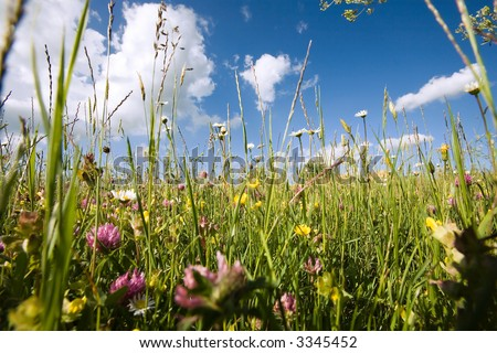 In the open countryside with grass, flowers, daisyflowers and so on. Deep blue sky with white clouds. Very low Position with extreme wideanglelens. Springtime! Variation.