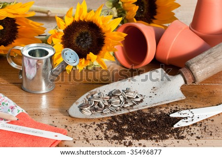 In the potting shed with sunflower seeds and plants with watering can and tools