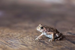 In the rainy season there are usually frogs and toads are less natural to eat when it rains. But in the summer it will be rare.