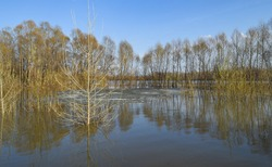 In the spring, the Ufa River overflowed its banks and flooded the forest