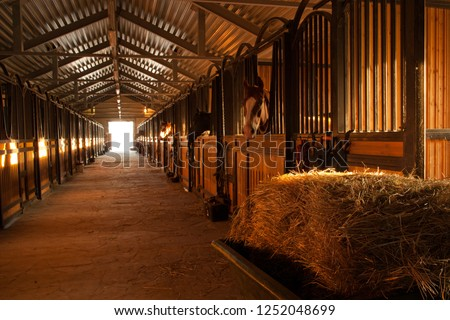 In the stable with horses in a equestrian center near russian city Kaluga. Photo stock ©