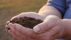 In the strong hands of farmer, he holds a handful of fertile land. The concept of agriculture, agribusiness. The gardener holds humus, fertilized soil, compost soil in his palms. Agriculture and