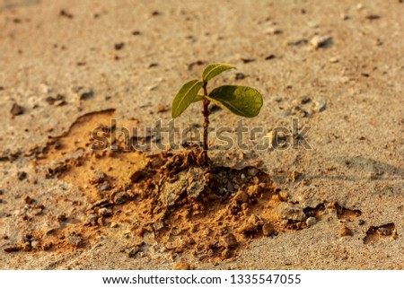 In the wasted land ,A strong sprout has been growing and get stronger , It 's a symbol of  hope , a symbol of life , a symbol of survival . #1335547055