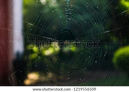 in this picture the spider has made a beautiful web design , spiders are such artist insects