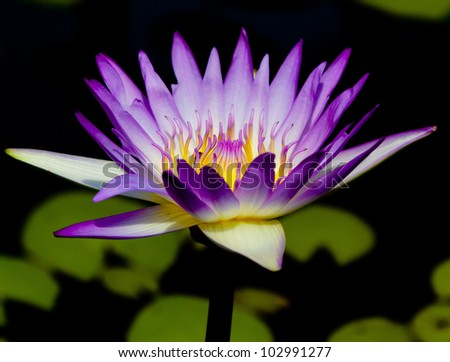In Water Isolated Flower
