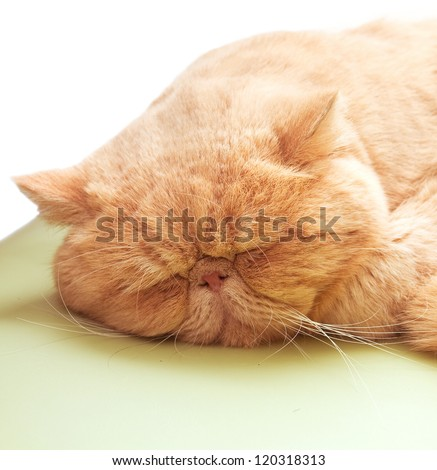 In winter and spring where it feels cold, people and cat like lying in warm places and rather than wake up