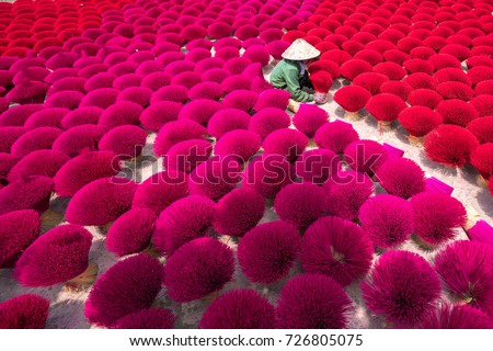 Incense sticks drying outdoor with Vietnamese woman wearing conical hat in north of Vietnam