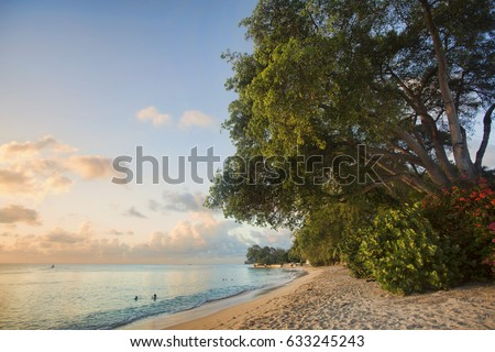 Incredible Barbados Caribbean beach known as Gibbs Bay with a famous huge Manchineel tree on it