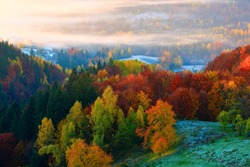 Incredible landscape with green grass in frosting, fog and light soft sunshine in the cold autumn morning.