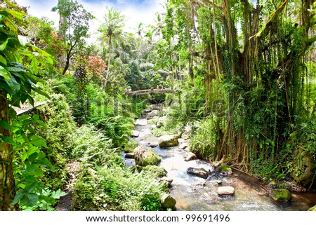 Incredible river flows in the jungle of Bali, Indonesia