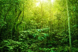 Incredible tropical green forest view with sun flare in morning.