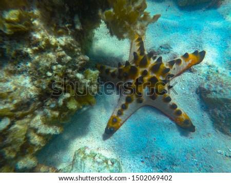 Incredible underwater world, underwater star