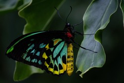 Incredible vibrant butterflies found in Niagara falls Butterfly Conservatory where over 45 species of butterflies from around the world can be found!