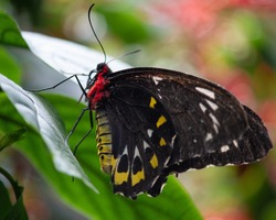 Incredible vibrant butterflies found in Niagara falls Butterfly Conservatory where over 45 species of butterflies from around the world can be found