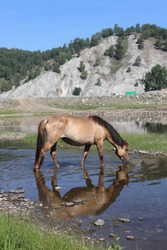 Incredibly beautiful landscape overlooking a slender horse grazing on the bank of the river