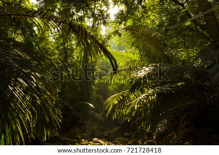 India mountain jungle #721728418