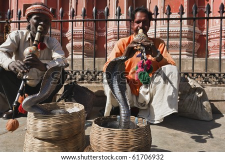 India. Rajasthan, Jaipur, snake charmers make two king cobras (Ophiophagus hannah) dance in front of the Winds Palace - stock photo