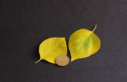 Indian currency coins with autumn leaf on black background